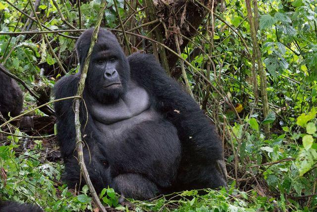 Parco del Virunga