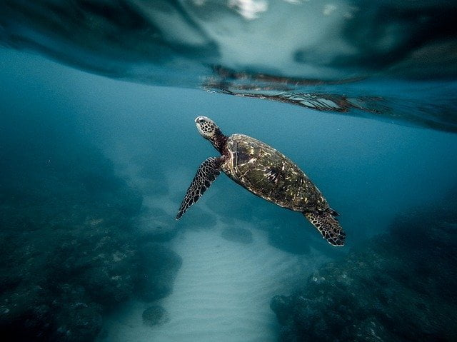 Ripristinare gli oceani entro il 2050: la sfida della scienza