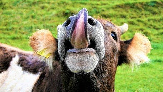 Benessere animale: un'etichetta per certificarlo