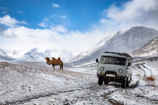 Yes, camels can also be in the snow.