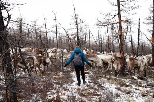 Garder les rennes