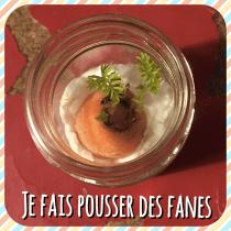 JE-FAIS-POUSSER-DES-FANES-DE-CAROTTES