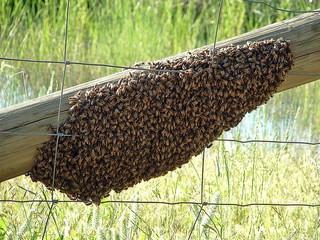 apicultura online, cursuri