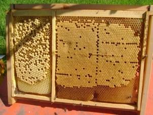 cursuri de apicultori