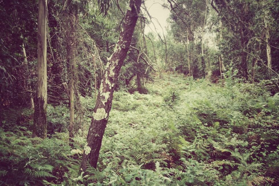 Bosques - Por Nacho Goberna © 2012