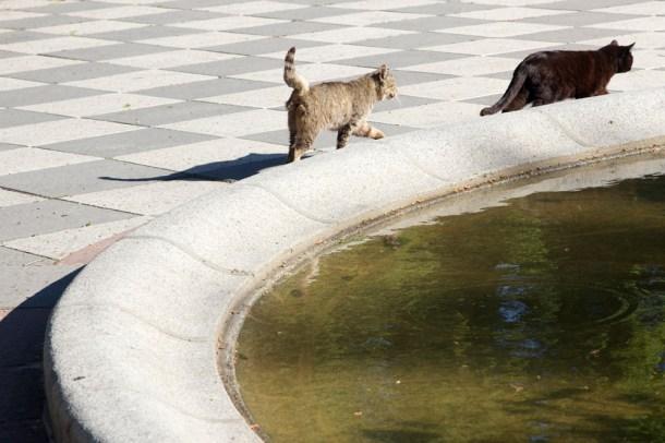 Gatos en el Parque del Retiro de Madrid. Karina Beltrán © 2013