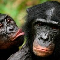 Lo que el reino animal nos enseña sobre el sexo