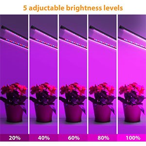 Grow Lights 03 | LED Corner