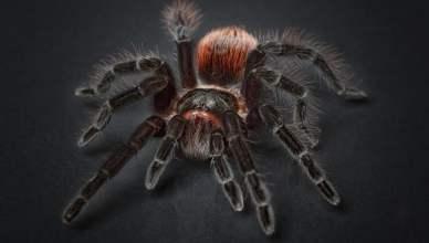 phobies araignées développement peresonnel