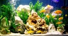 akvarium_viz_3-600x320 Akvárium led világítás (akár házilag) ötletek Tippek