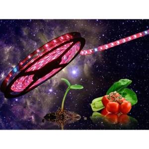 Növényvilágítás Led szalag növények mesterséges megvilágítására.