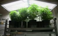 Best T5 Grow Lights for Growing Cannabis  2018 Reviews