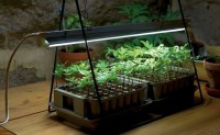 How to Grow Houseplants in Artificial Light - LED Grow ...