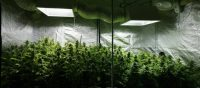 Indoor Grow tent kit reviews and best products to grow ...