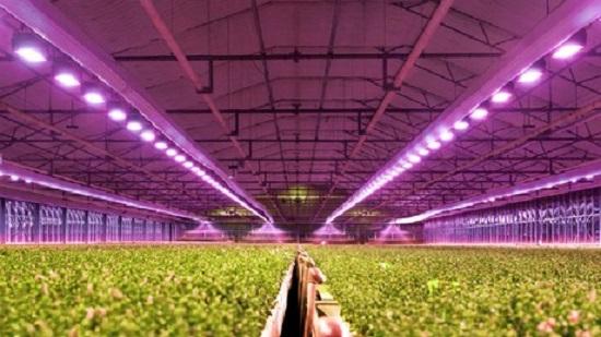 Top Rated Led Grow Lights