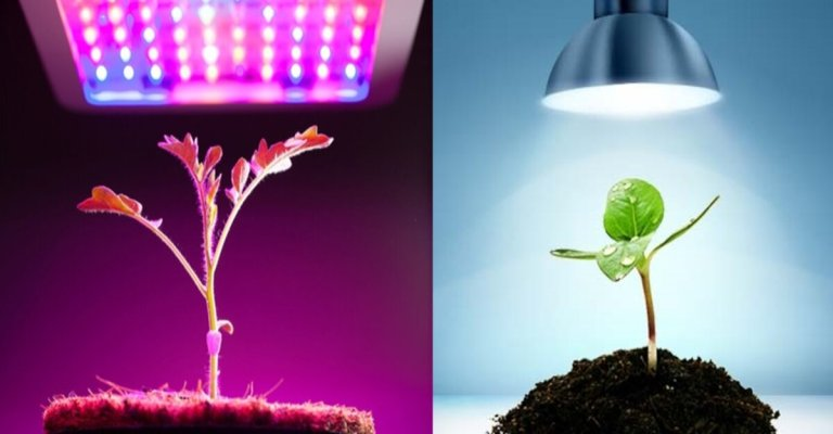 Can Any LED Light Be Used As A Grow Light?