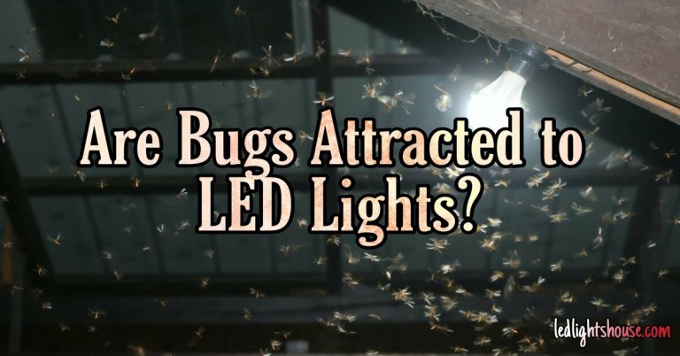 are bugs attracted to led lights