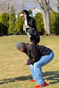 Jake doing a trick with LEDR Dog Training