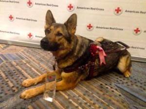 izaac red cross hero