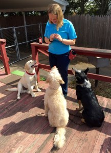 LEDR Dog Training's Laura DeMaio Roy with three students.