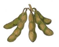 Auntie Yang's Great Soybean Picnic art