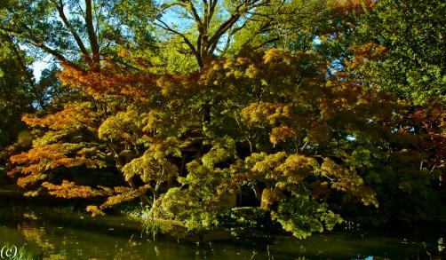 Japanese_Garden-2