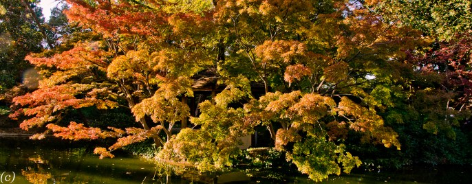 Lee Ann Torrans -Japanese Garden Landscape and Design