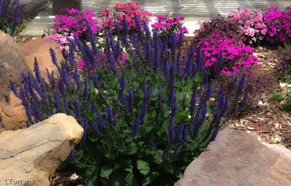 Dallas Landscaping - May Bloomers Lee Ann Torrans