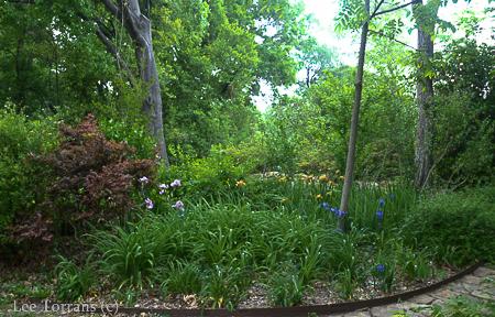 Woodland Iris Garden