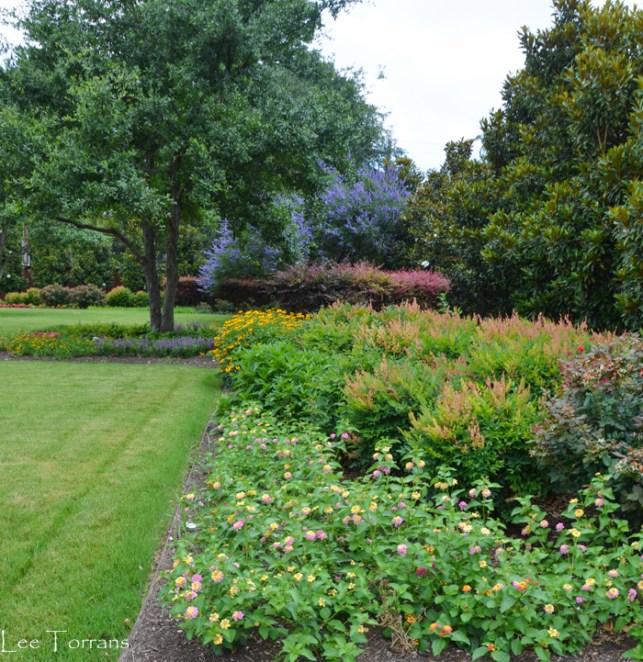 Highland Park Park Nandina and Vitex Tree