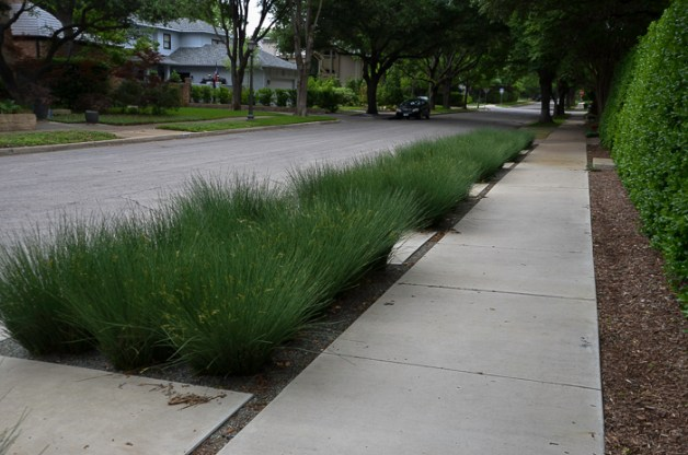 Ornamental_Grass_Texas_Lee_Ann_Torrans-3