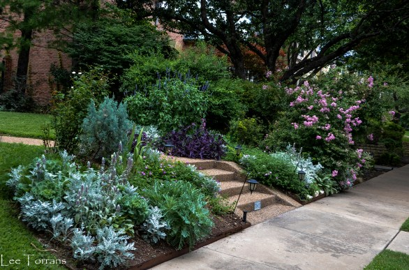 Texas perennial garden top ten summer perennials lee ann torrans june perennials in texas mightylinksfo