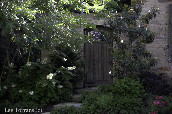 Alice - Oak Leaf Hydrangea