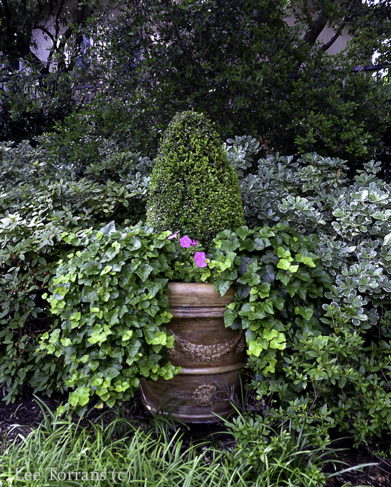 Container Gardening with Ivy and Shrubs