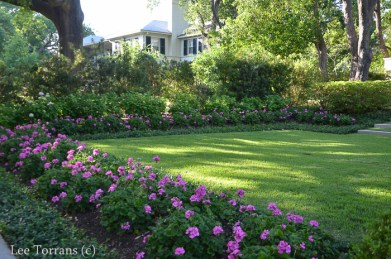 Hydrangea and Geranium Border in Dallas