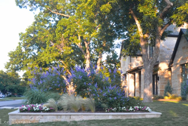 Texas Lavendar Vitex Tree Superstar