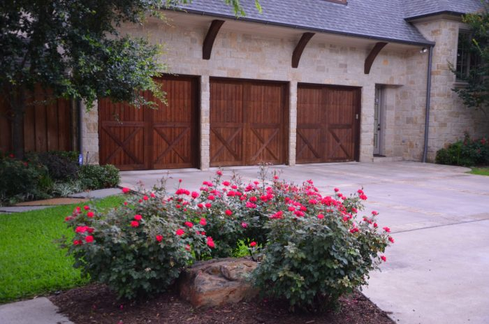 Welcoming group of red Knockout shrub roses at garage.