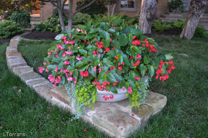 Container Gardening Texas Dallas