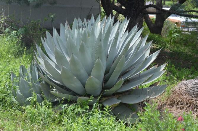 April_Texas_Gardening-2258