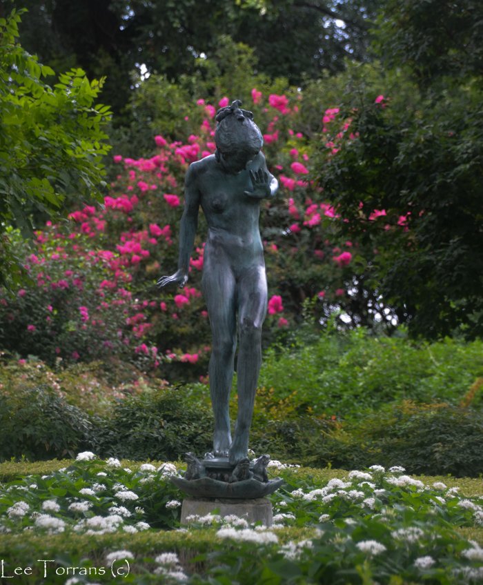 Dallas Arboretum Nymph Garden