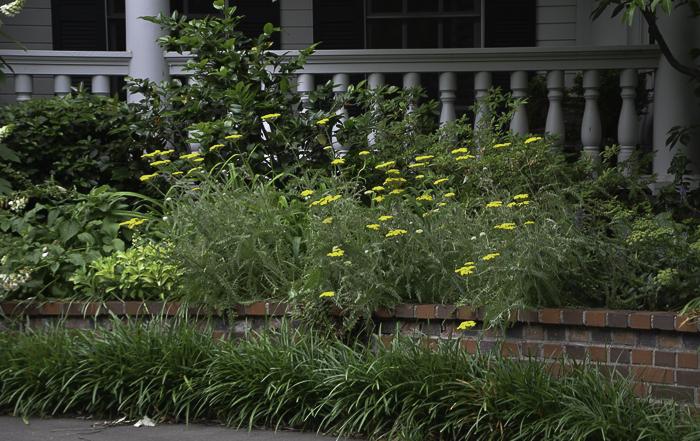 Texas Perennial Garden Top Ten Summer Perennials Lee Ann