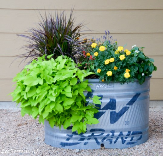 Self watering systems for containers make these worry free.