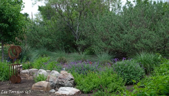 Henry Duelberger Sage in Texas April Perennial Garden Landscape Design