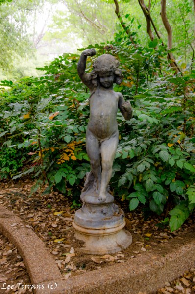 Mahonia with garden cherub in Fort Worth Botanical garden.