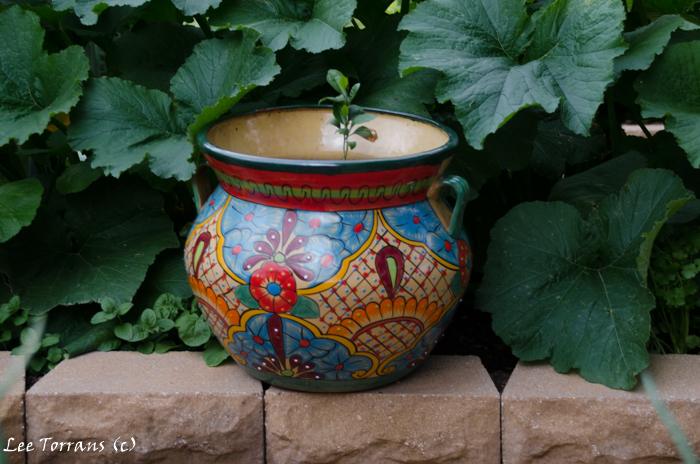 Squash leaves surround a painted clay flower pot.
