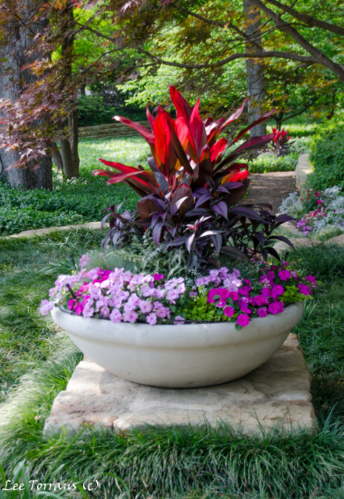 Container Gardening in Dallas Landscape Design