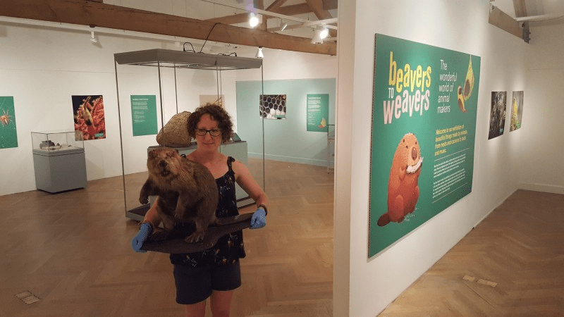 Rebecca Machin, Leeds Museums and Galleries' curator of natural sciences with a Eurasian beaver on display at Leeds City Museum