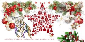 Leeds Star XMas Card