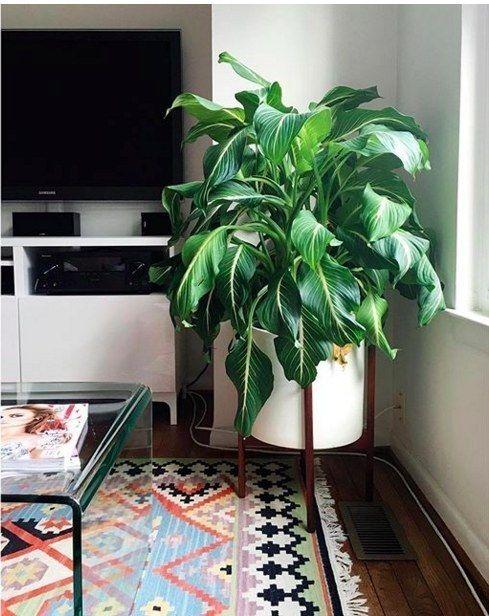 Plants Require No Light