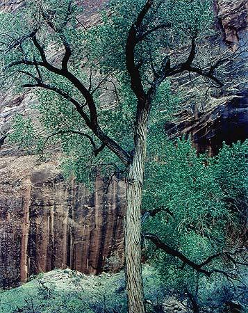 eliot-porter-gc-cottonwood-moki-canyon